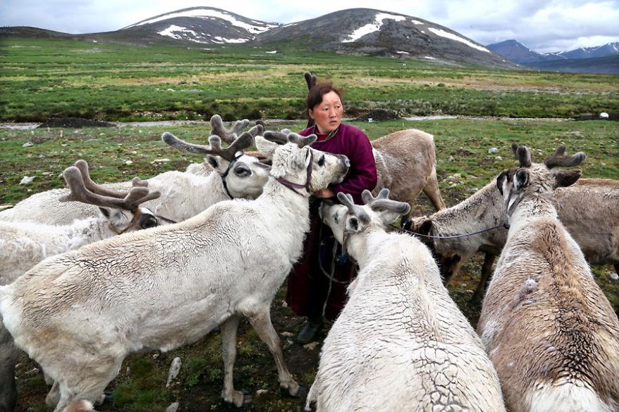 tsaatan-popolo-nomadi-mongolia-renne-10