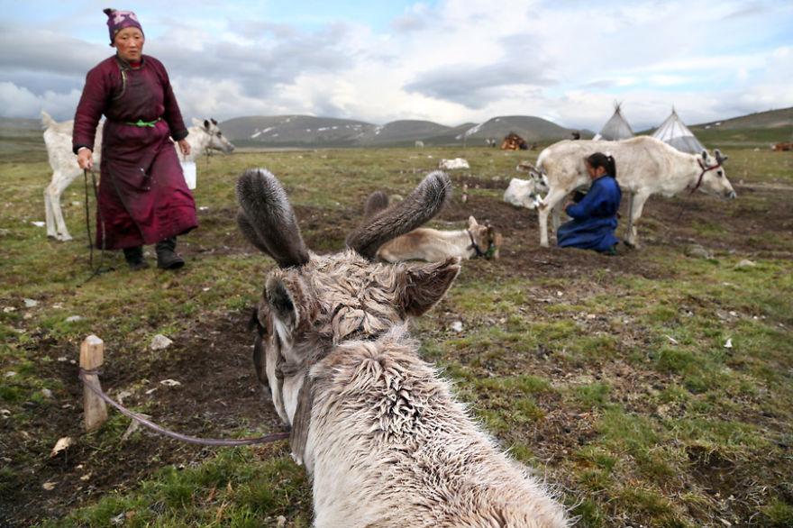 tsaatan-popolo-nomadi-mongolia-renne-12
