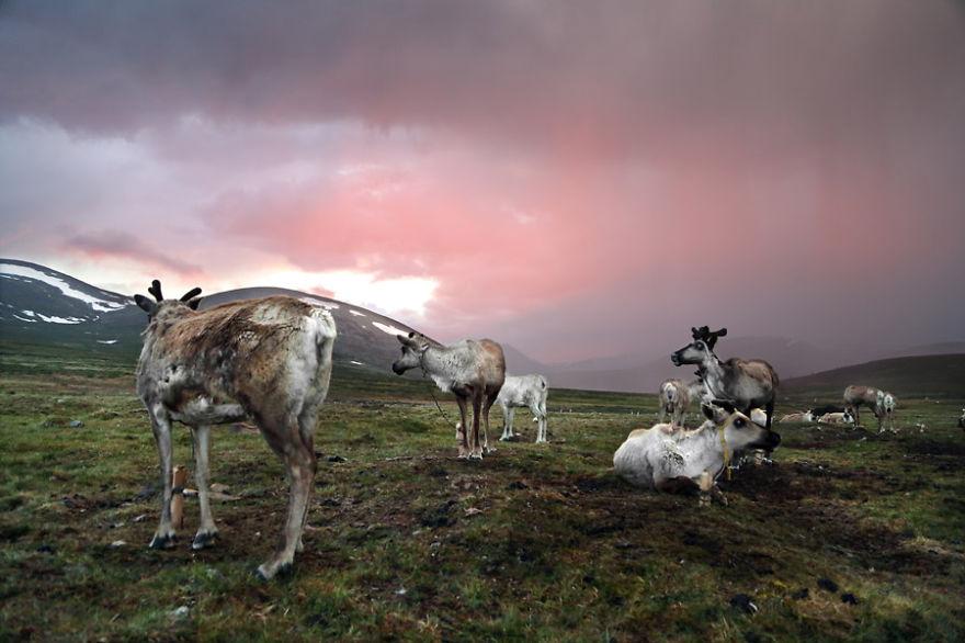tsaatan-popolo-nomadi-mongolia-renne-18