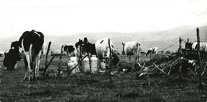 ulisse-bezzi-contadino-fotografo-90-anni-ravenna-new-york-02