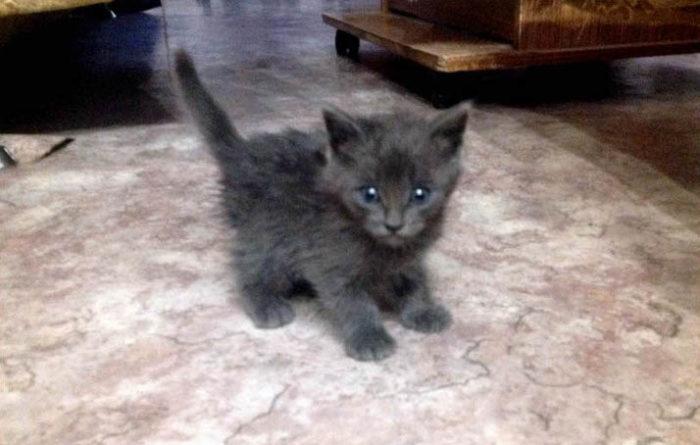 uomo-salva-gattini-acqua-petrolio-russia-6