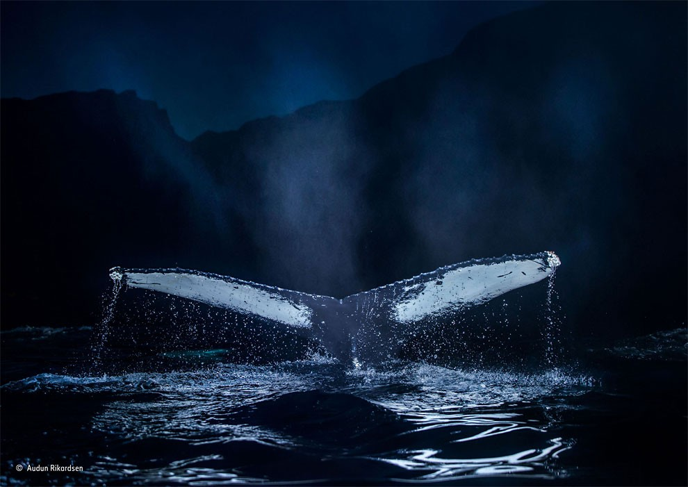 vincitori-concorso-wildlife-photographer-of-the-year-2015-14