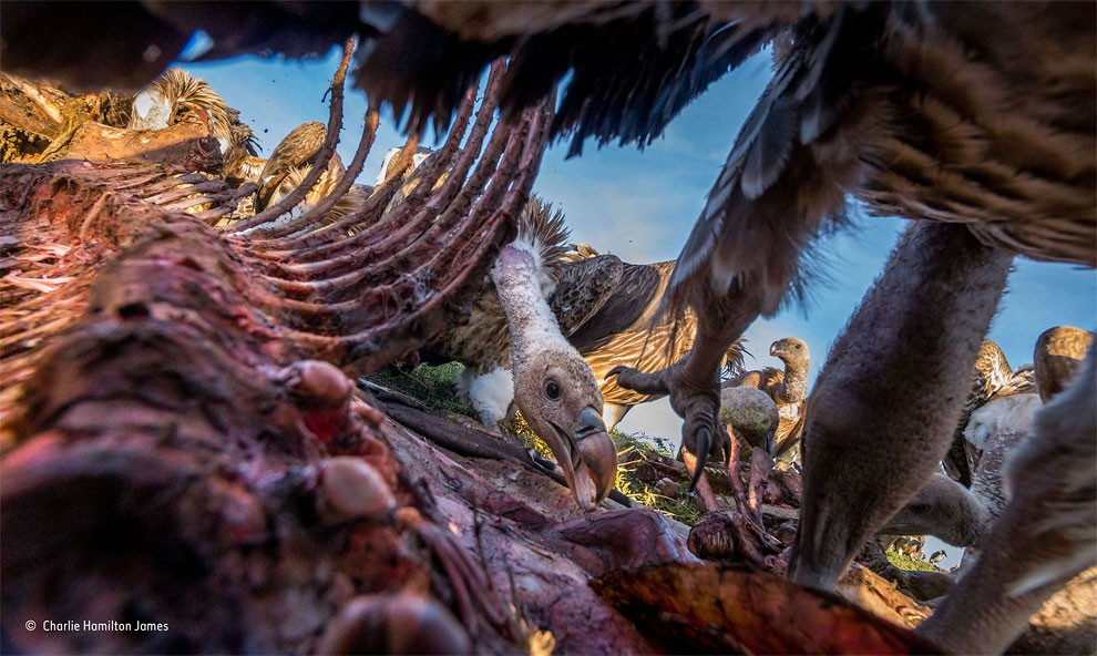 vincitori-concorso-wildlife-photographer-of-the-year-2015-20