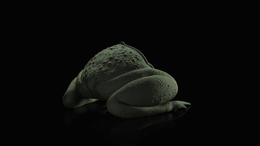 animal-chair-sedie-sembianze-animali-maximo-riera-03