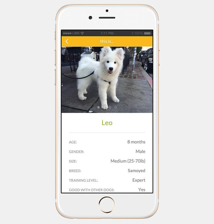 app-prestare-affittare-cane-barknborrow-09