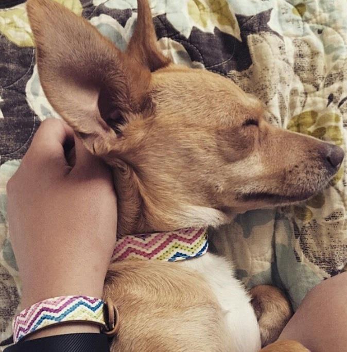braccialetto-collare-accoppiati-cani-gatti-amicizia-02