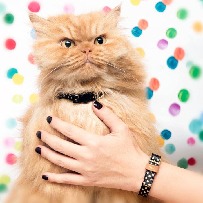 braccialetto-collare-accoppiati-cani-gatti-amicizia-06