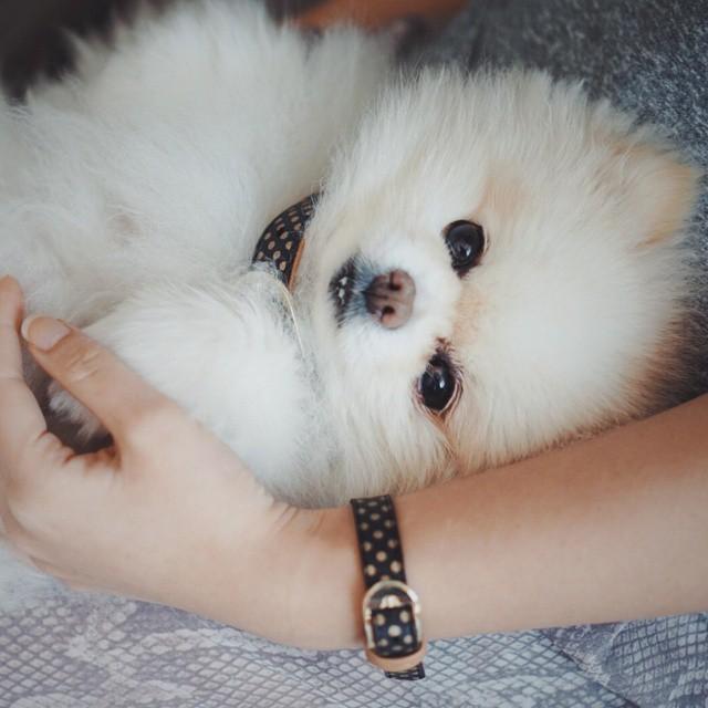 braccialetto-collare-accoppiati-cani-gatti-amicizia-07