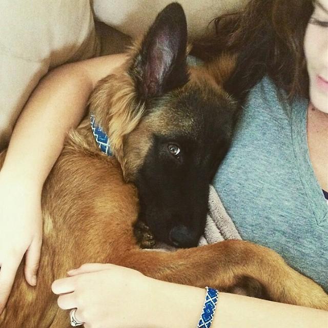 braccialetto-collare-accoppiati-cani-gatti-amicizia-12