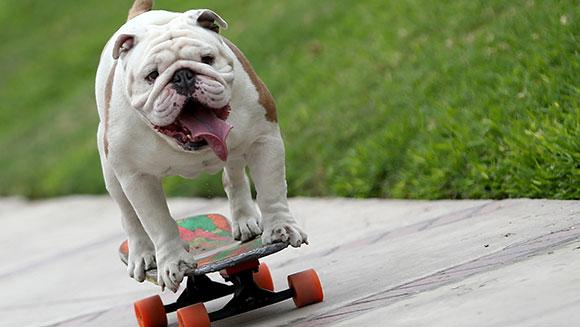 cane-skateboard-otto-record-1