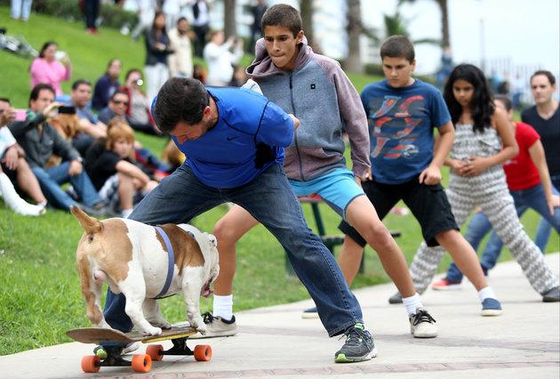 cane-skateboard-otto-record-2
