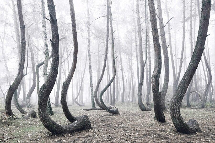 crooked-forest-foresta-alberi-curvi-polonia-fotografia-kilian-schoenberger-1