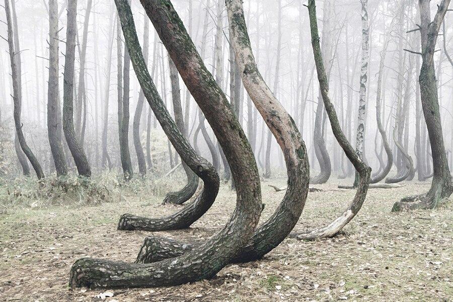 crooked-forest-foresta-alberi-curvi-polonia-fotografia-kilian-schoenberger-2