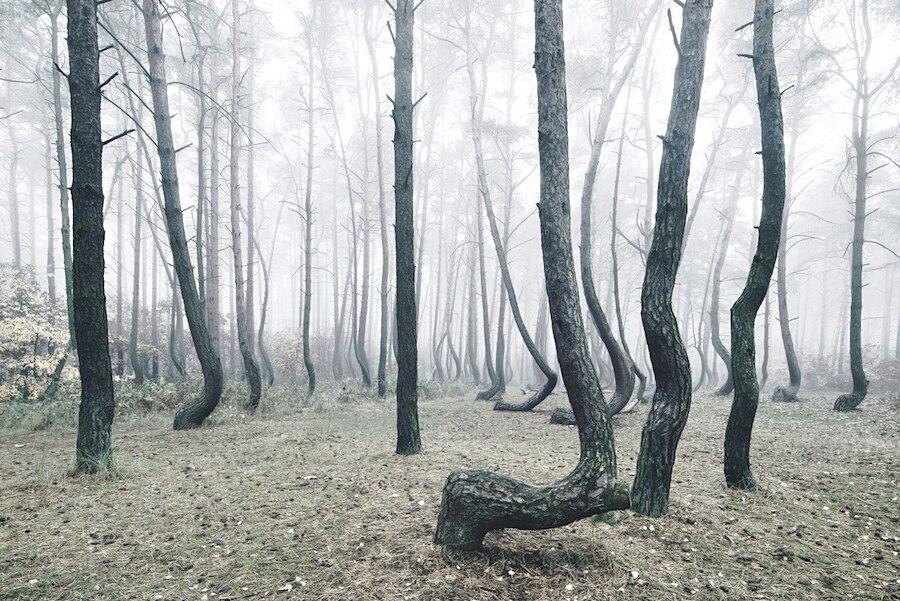crooked-forest-foresta-alberi-curvi-polonia-fotografia-kilian-schoenberger-3