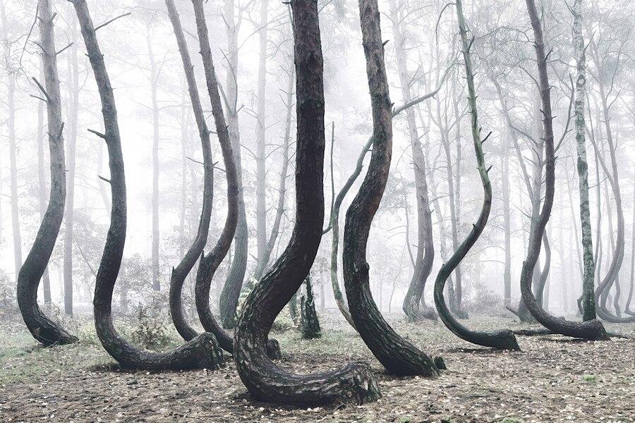 crooked-forest-foresta-alberi-curvi-polonia-fotografia-kilian-schoenberger-4