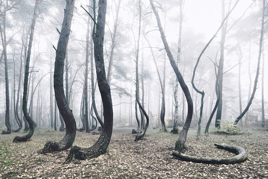 crooked-forest-foresta-alberi-curvi-polonia-fotografia-kilian-schoenberger-5