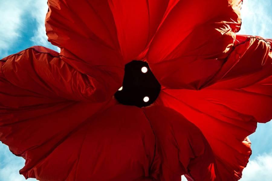 installazione-interattiva-fiori-giganti-gerusalemme-hqarchitects-7