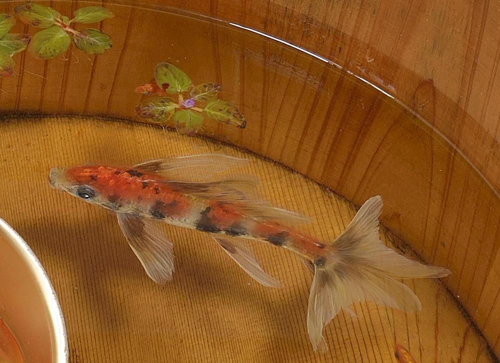 pesci-rossi-dipinti-strati-resina-iperrealismo-riusuke-fukahori-02