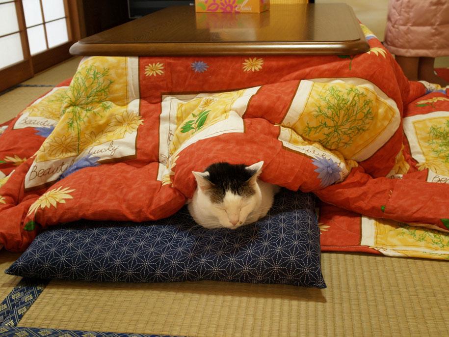 tavolino-scalda-letto-kotatsu-giappone-1