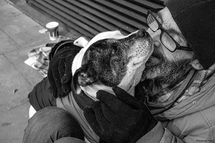 cani-senza-tetto-migliori-amici-14