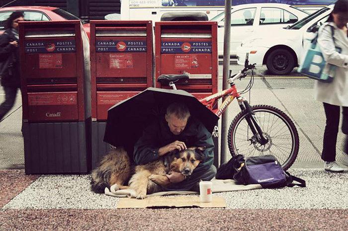cani-senza-tetto-migliori-amici-24