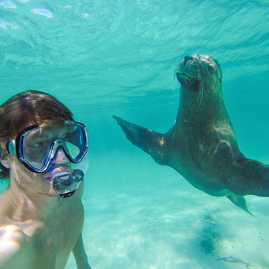 divertenti-selfie-con-animali-allan-dixon-01