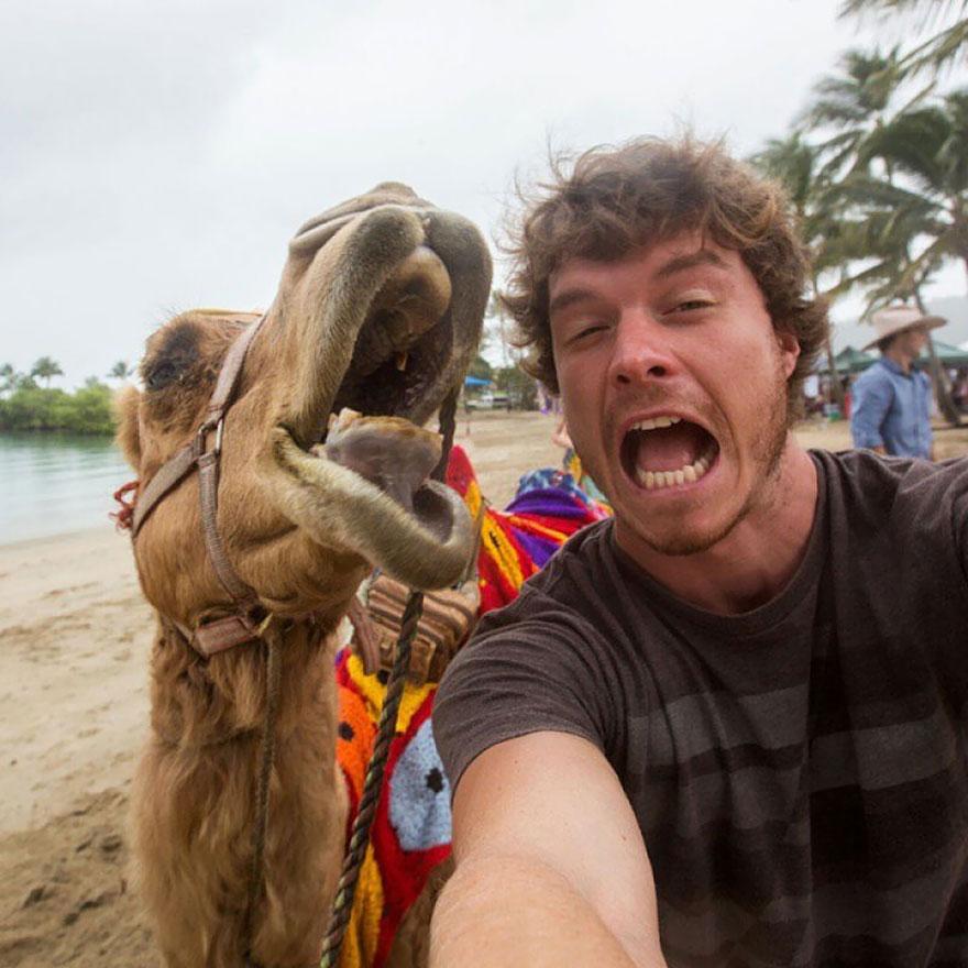divertenti-selfie-con-animali-allan-dixon-13