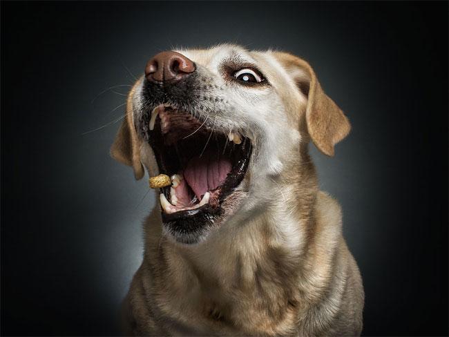 foto-cani-che-prendono-cibo-al-volo-christian-vieler-02