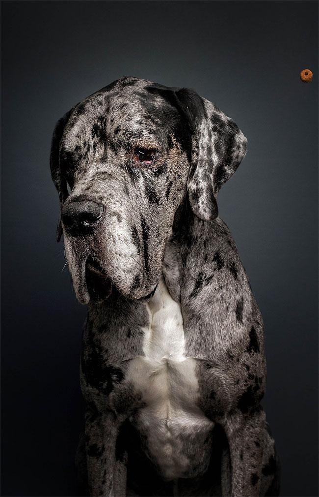 foto-cani-che-prendono-cibo-al-volo-christian-vieler-04