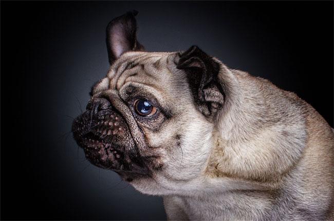 foto-cani-che-prendono-cibo-al-volo-christian-vieler-06
