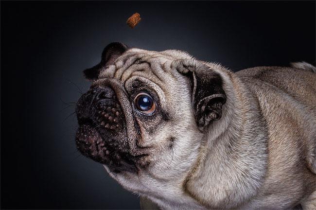 foto-cani-che-prendono-cibo-al-volo-christian-vieler-07
