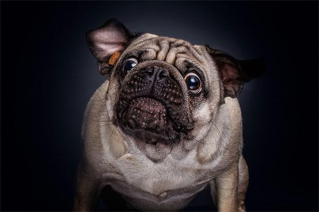 foto-cani-che-prendono-cibo-al-volo-christian-vieler-08