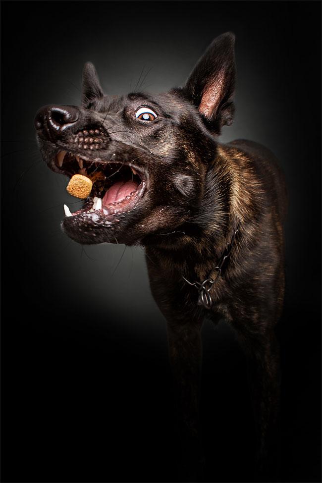 foto-cani-che-prendono-cibo-al-volo-christian-vieler-11