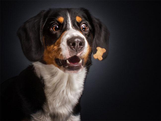 foto-cani-che-prendono-cibo-al-volo-christian-vieler-13
