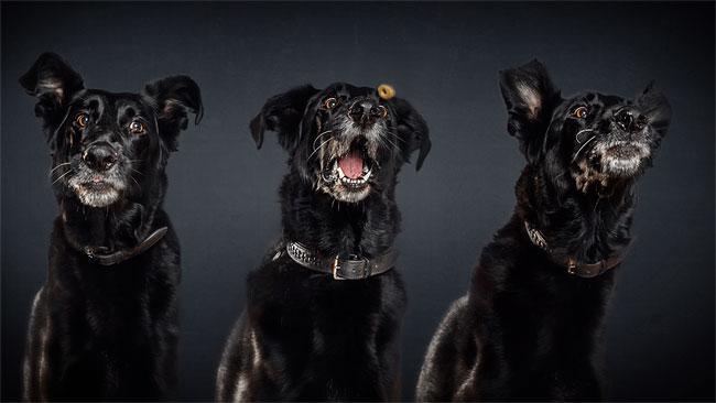 foto-cani-che-prendono-cibo-al-volo-christian-vieler-15