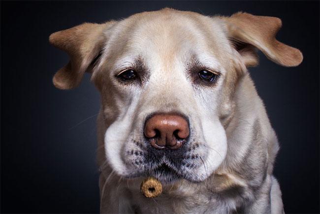 foto-cani-che-prendono-cibo-al-volo-christian-vieler-16