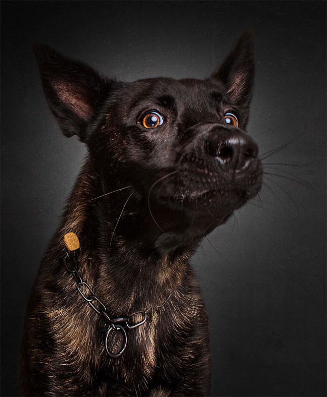 foto-cani-che-prendono-cibo-al-volo-christian-vieler-18
