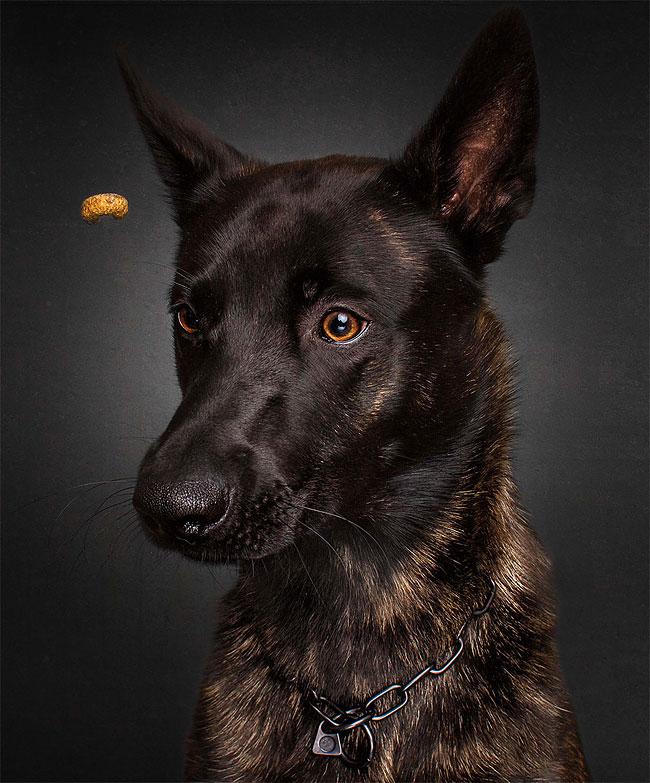 foto-cani-che-prendono-cibo-al-volo-christian-vieler-19