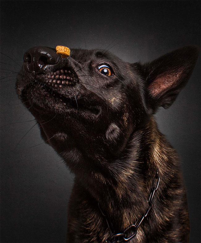 foto-cani-che-prendono-cibo-al-volo-christian-vieler-20