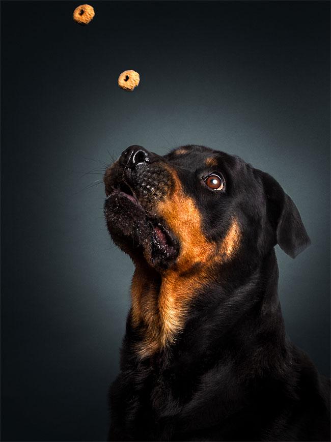 foto-cani-che-prendono-cibo-al-volo-christian-vieler-21