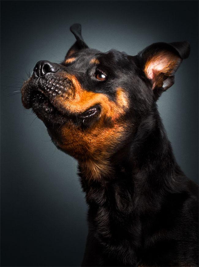 foto-cani-che-prendono-cibo-al-volo-christian-vieler-22