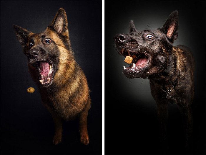 Foto divertenti di cani keblog - Bagno cane dopo antipulci ...