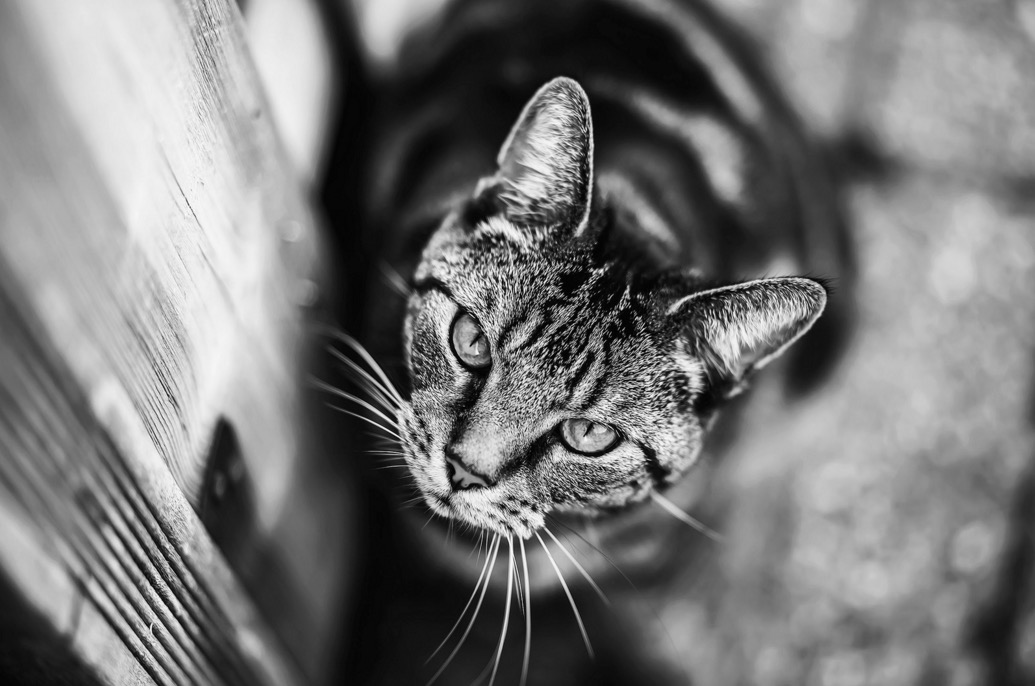 foto-ritratti-gatti-felicity-berkleef-04