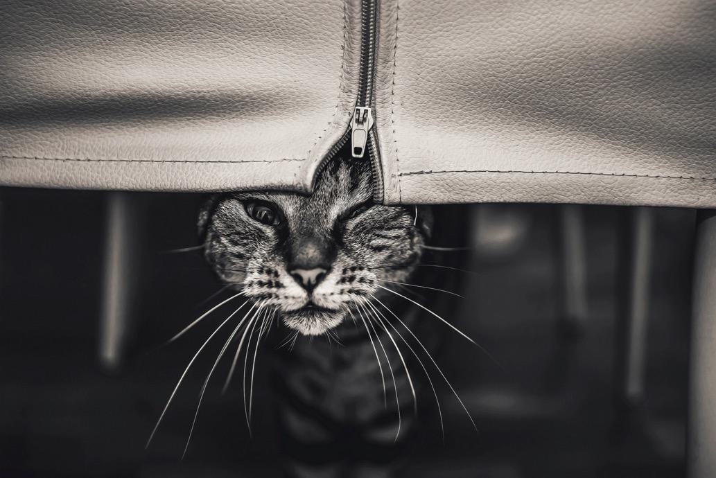 foto-ritratti-gatti-felicity-berkleef-06