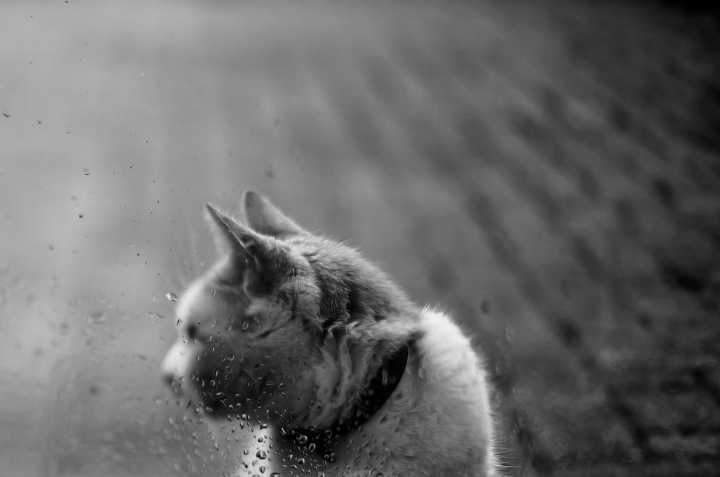 foto-ritratti-gatti-felicity-berkleef-08
