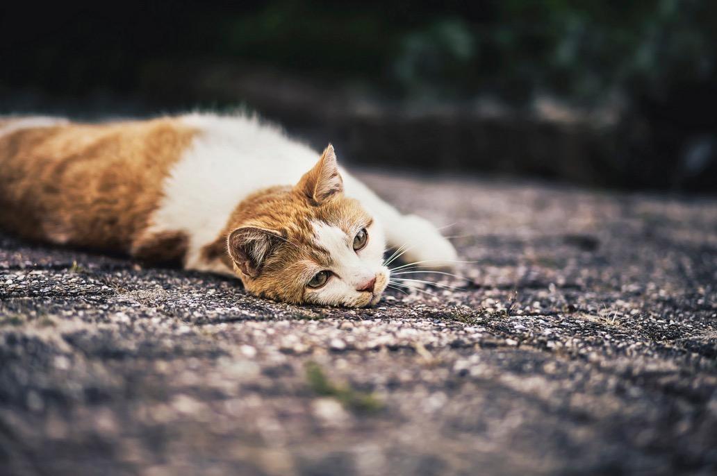 foto-ritratti-gatti-felicity-berkleef-10