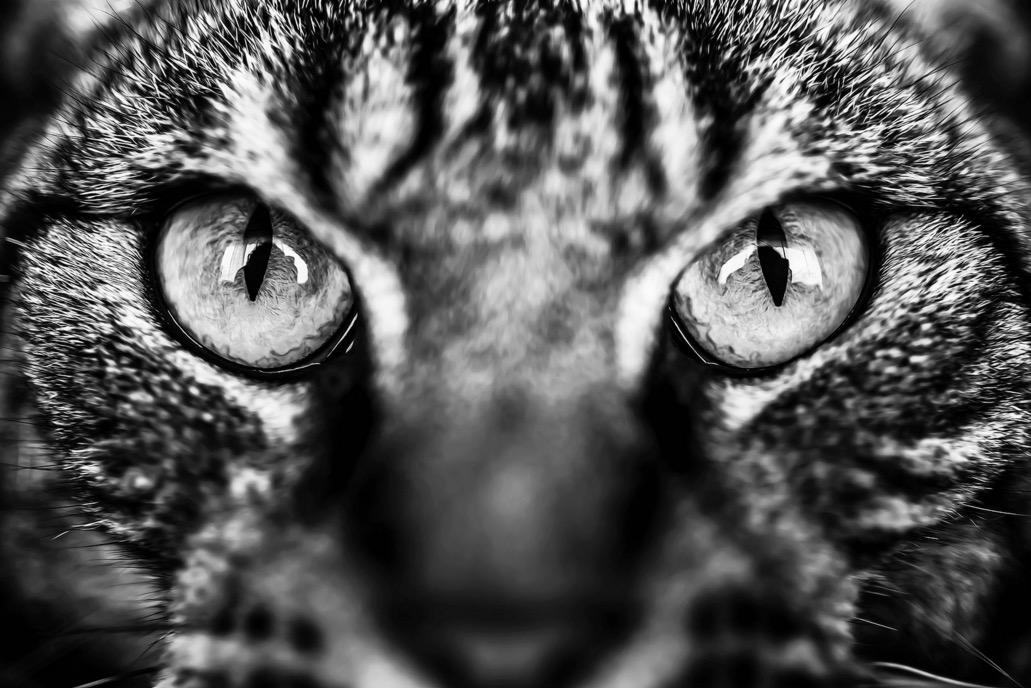 foto-ritratti-gatti-felicity-berkleef-11