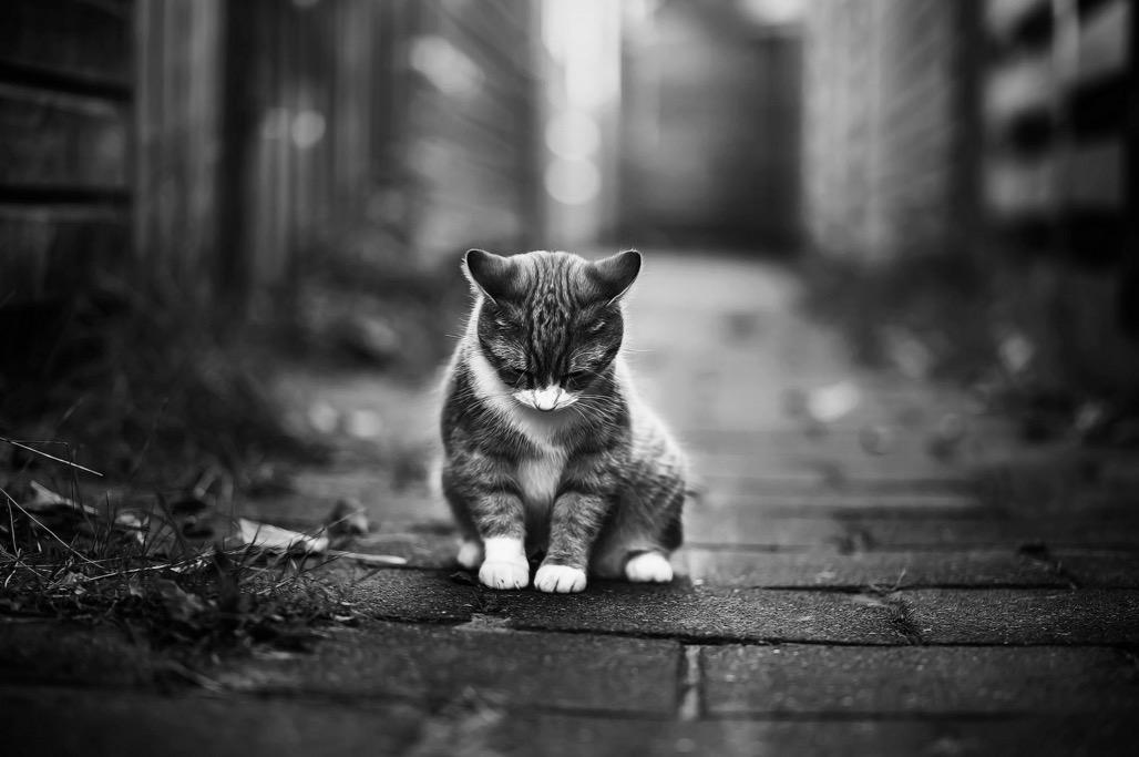 foto-ritratti-gatti-felicity-berkleef-13