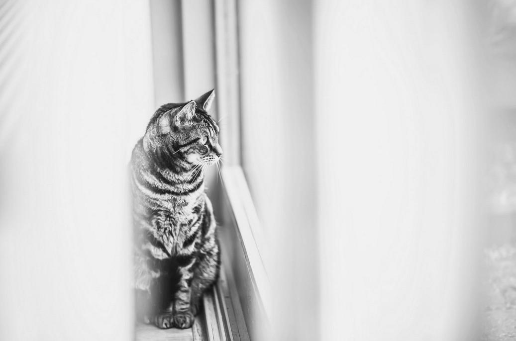 foto-ritratti-gatti-felicity-berkleef-14
