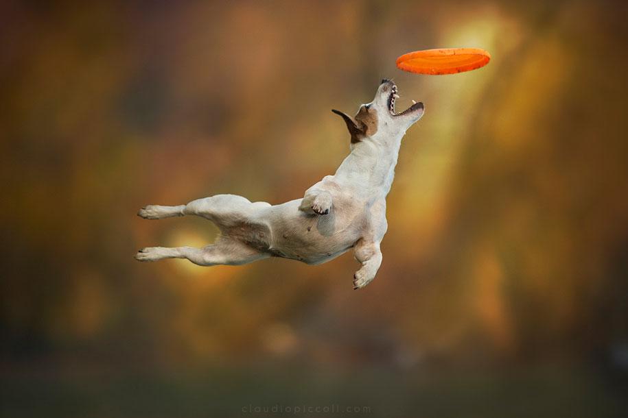 fotografia-cani-che-volano-frisbee-claudio-piccoli-01